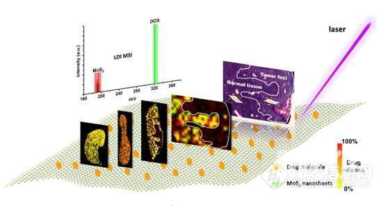 研究人员研发新型无标记激光解吸电离质谱成像技术