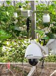 WLW-1智慧农业监控系统