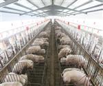 畜牧养殖保温电地暖