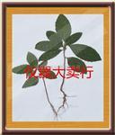 ZC植物标本框