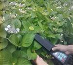 便攜式活體葉面積測量儀