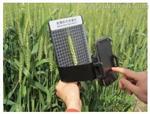 麦穗形态测量仪SYSMS-X-I