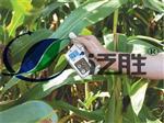 美国SPAD-502DL叶绿素仪