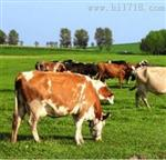 NSW牛流行热(BEF)病毒抗体检测试剂盒