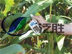 SPAD-502Plus葉綠素儀
