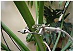 SD-5T/SD-6T植物茎秆生长变化传感器