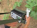 恒美植物蒸腾速率测定仪